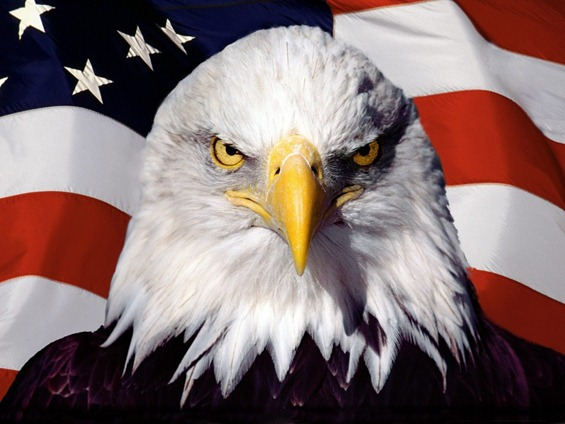 ws_Eagle_on_flag_1024x768